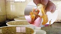 曝毒凤爪吃出蛆 回收变质品再制
