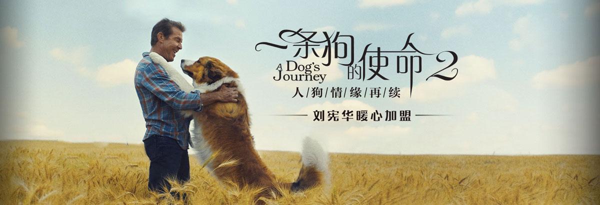 《一条狗的使命2》小狗贝利的新使命[付费]
