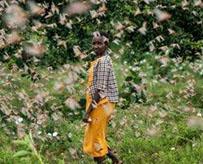 4000亿蝗虫肆虐印巴